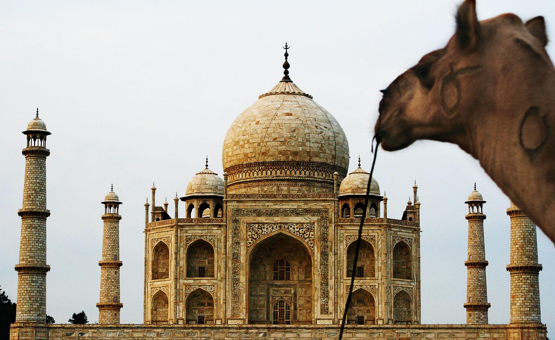 camel-at-taj-mahal.jpg